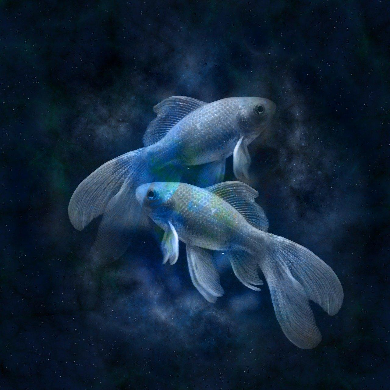 affinità coppia Pesci Scorpione