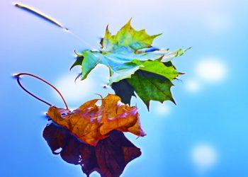 I segni zodiacali e le stagioni dell'anno ecco quale delle 4 vi rappresenta