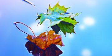 I segni zodiacali e le stagioni dell'anno: ecco quale delle 4 vi rappresenta