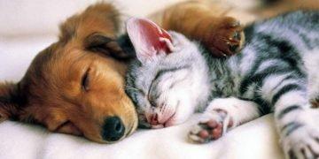 Cane o gatto? La tua risposta rivela molti aspetti della tua personalità